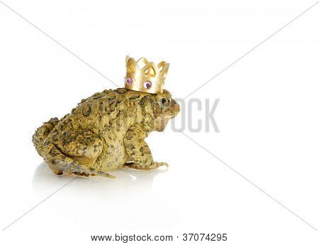 toad prince - toad wearing a gold crown on white background