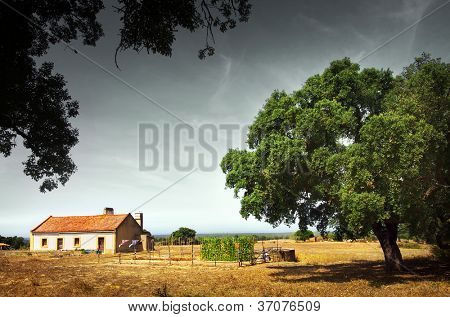 Rural landscape with little white house with garden and a big tree.