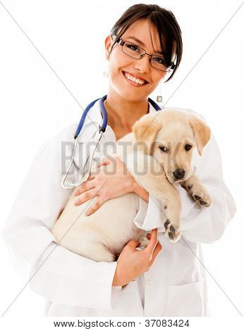 Vet holding a little puppy dog - isolated over a white background