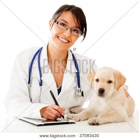 Vet using technology with a little dog - isolated over a white background
