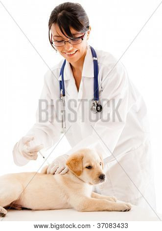 Puppy getting a vaccine at the vet - isolated over a white background
