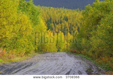 Autumn Road In Forest.