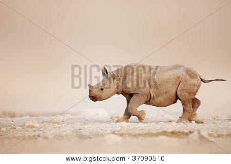 Baby Black Rhinoceros running over salty desert plains of Etosha