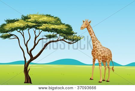 Illustration of African scene with giraffe