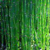 picture of garden snake  - Bamboo like looking - JPG