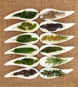 Fresh herb selection of varieties of sage, thyme, fennel, chives, mint, rosemary and bay leaf sprigs