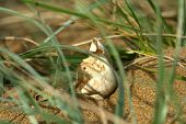 stock photo of sea-turtles  - An empty sea turtle egg on the beach in the grass - JPG