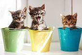 image of puss  - Three funny kittens sitting inside colorful pots - JPG