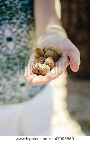Woman Showing Handful Of Almonds