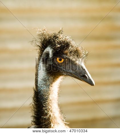 The Funny Ostrich