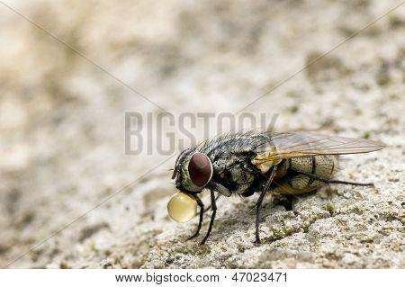 Housefly 001-130427