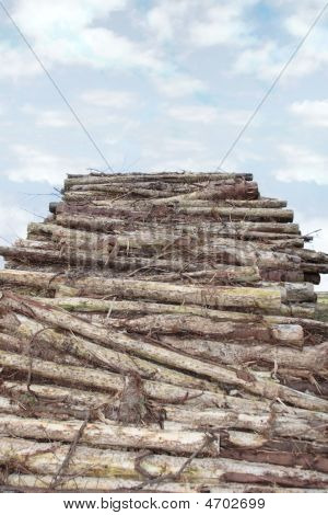 Logs High Piled
