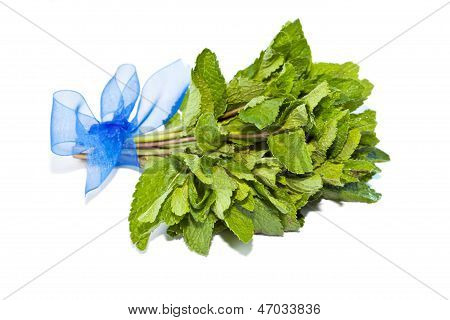 Fresh Green Bundle Mint Isolated On White