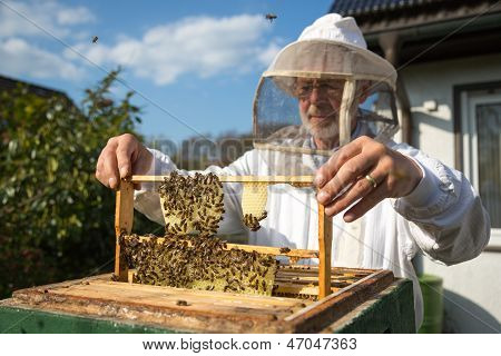 Apicultor cuidando de abejas