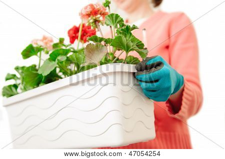 Female Hands Planting