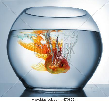 Goldfish Punging
