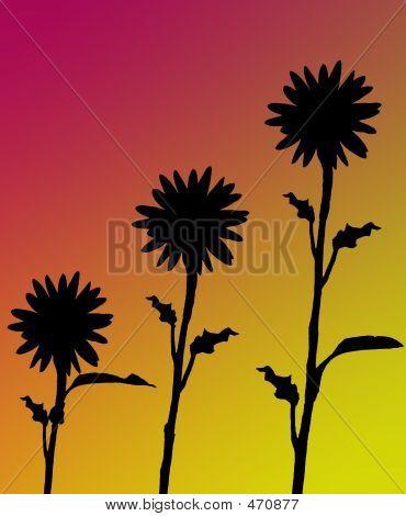 Background - Sunflower Silhouette