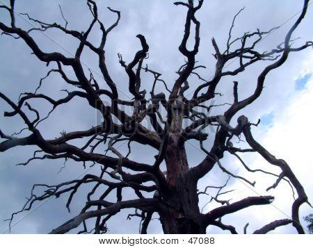 Árbol, pelado, áspero, llegando hasta el cielo como dedos