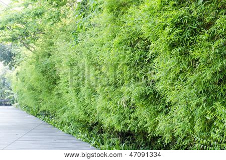 Aisa Bamboo Groves