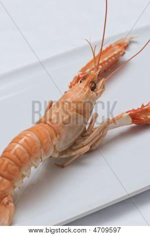 Nephrops Norvegicus Or Norway Lobster 4