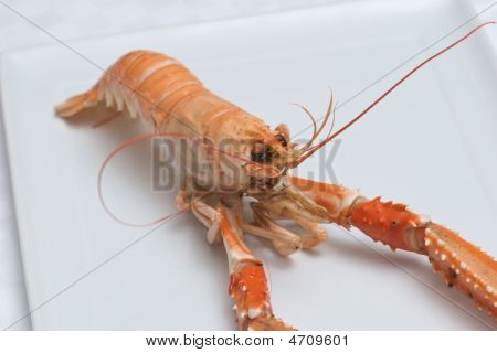 Nephrops Norvegicus Or Norway Lobster