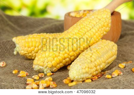 Fresh and dried corn on sackcloth, on bright background