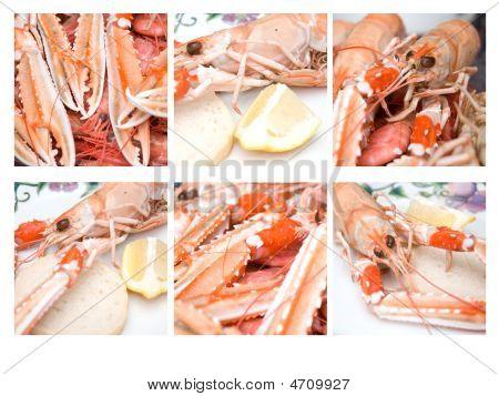 Nephrops Norvegicus Or Norway Lobster 14