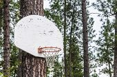 Pine Tree Basketball Hoop And Backboard 1