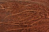 image of coir  - Coconut texture close - JPG