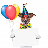 stock photo of dog birthday  - birthday dog with balloons and a white placard - JPG