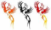 Photo of phoenix.