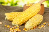 stock photo of sackcloth  - Fresh and dried corn on sackcloth - JPG