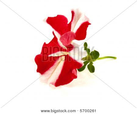 Flower On A White Background