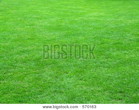 Stock photo : Football Field Grass