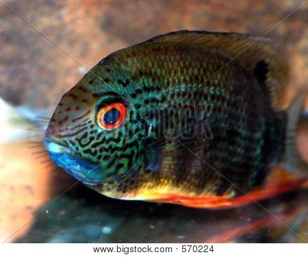 My Aquarium Fish