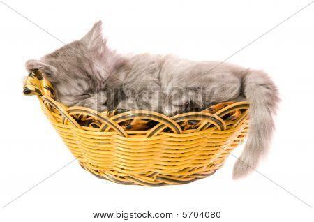 Fluffy Small Kitten