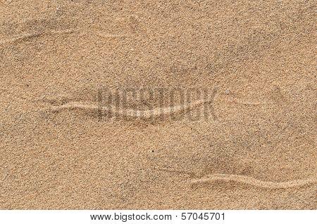 Sidewinding Snake Tracks Across The Sand