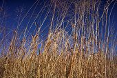 image of tall grass  - tall prairie grasses - JPG