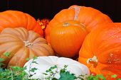 Autumn Harvest Of Pumpkins