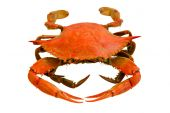 picture of cooked crab  - red boiled crab isolated on white background - JPG