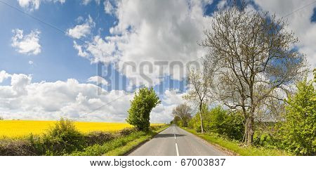 Rurual Road And Canola Crops