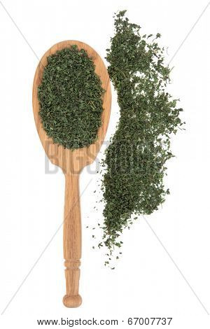 Fenugreek herb leaf sprigs in a wooden spoon and loose over white background.