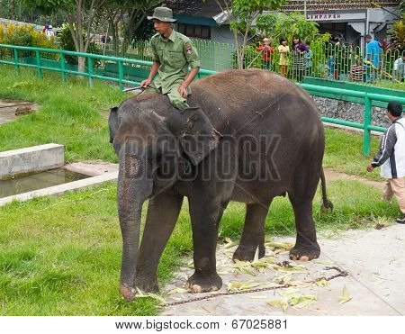 Mahout Rides On An Elephant In Zoo