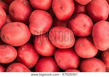 Raw Red Potatoes