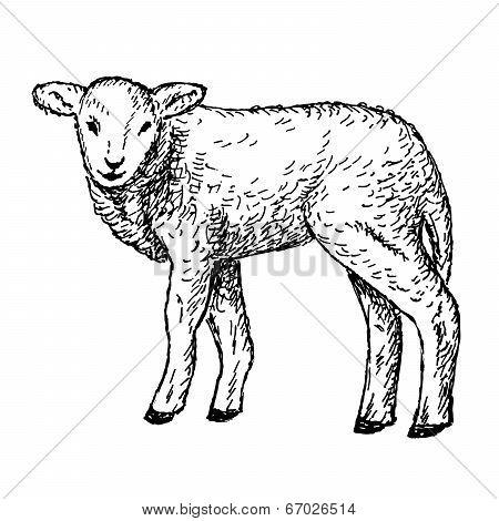 lamb hands drawing
