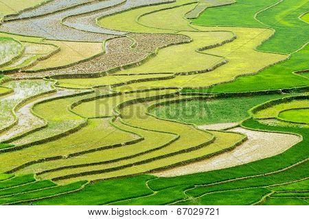Terraced fields in the new season