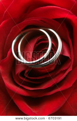Rings In Rose