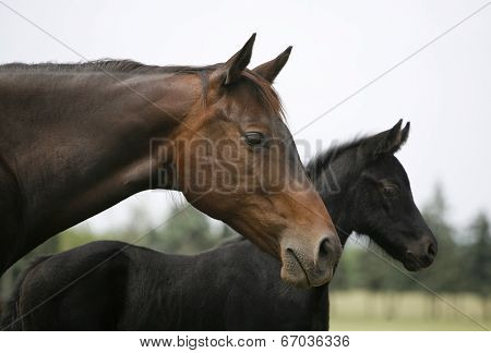 A head shot of a beautiful mare with her foal.