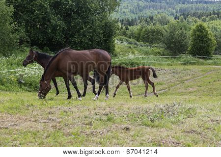 Easy Going Horses