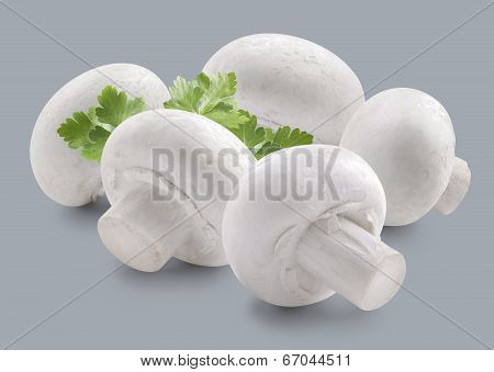 Mushroom Group And Parsley Isolated On Grey Background
